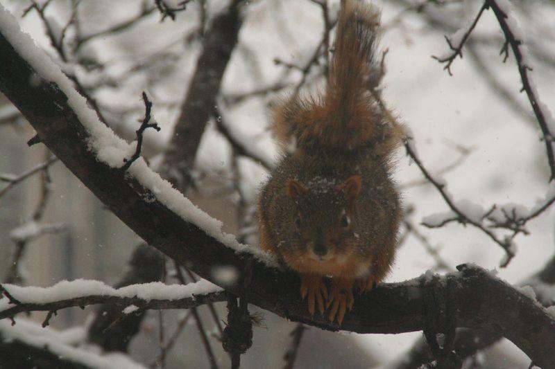 Snow sq