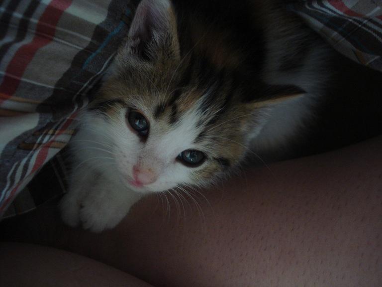 Tiny hiding