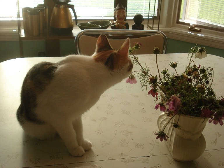 Lulu choosing her flowers