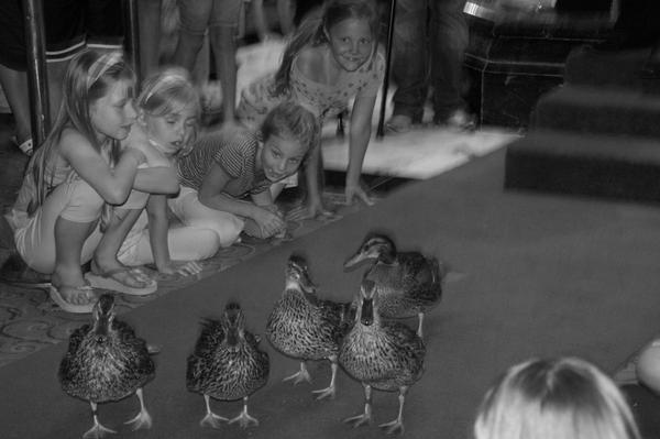 Peabody_ducks